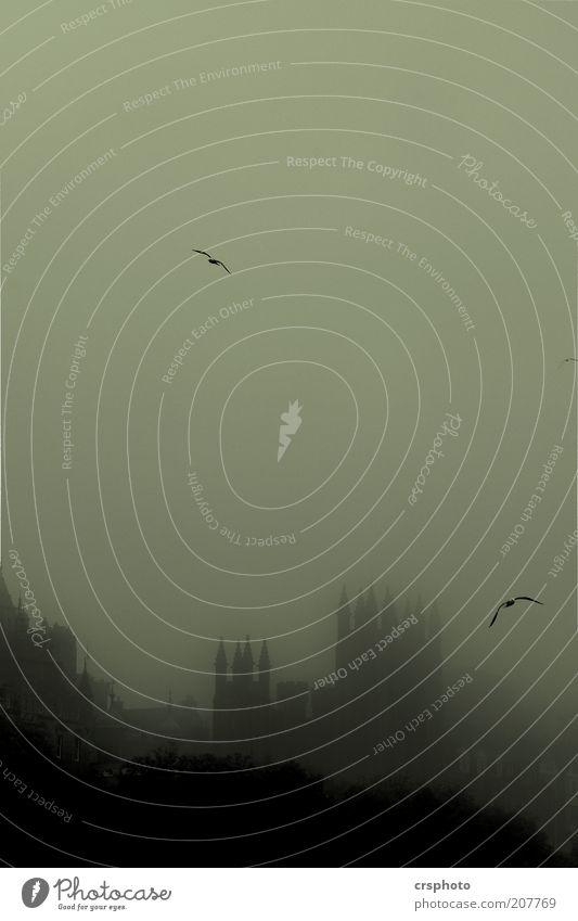 Wo Harry, Ron & Hermine Urlaub machen... Stadt Haus Tier Regen Vogel Nebel Kirche geheimnisvoll gruselig Skyline Bauwerk historisch skurril Schwarzweißfoto