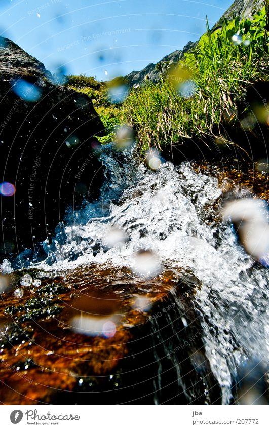 Erfrischung Leben Berge u. Gebirge Umwelt Natur Wasser Wassertropfen Sommer Schönes Wetter Pflanze Gras Alpen Grimsel Pass Bach Wasserfall Schweiz Europa fallen