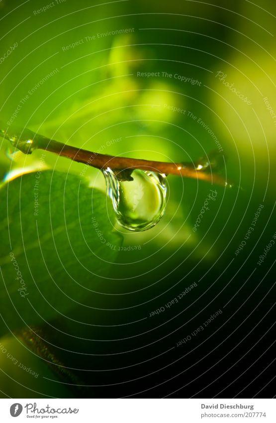 12 Tage Regen Wasser grün Sommer Pflanze Blatt Leben Frühling nass frisch Wassertropfen einzeln rund Tropfen Zweig feucht Tau
