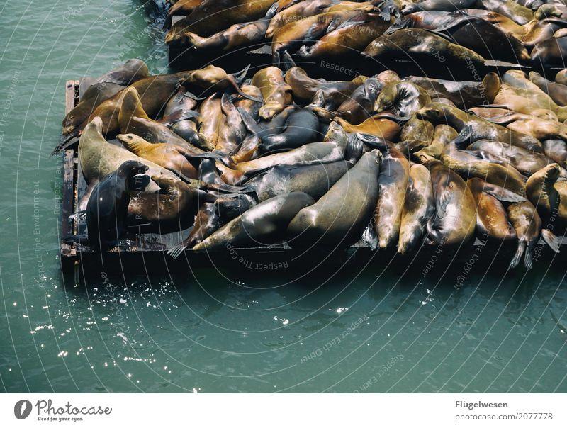 Montags einfach mal abhängen Ernährung Sushi schön Umwelt Wellen Küste Seeufer Flussufer Strand Bucht Fjord Riff Meer Tier Wildtier Fährte Streichelzoo Aquarium