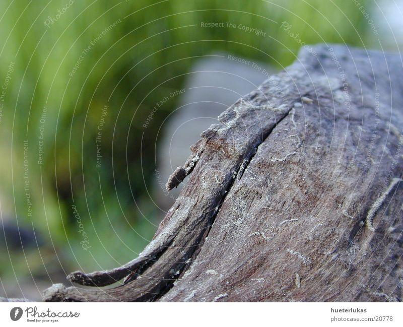 schwämgut Natur Holz