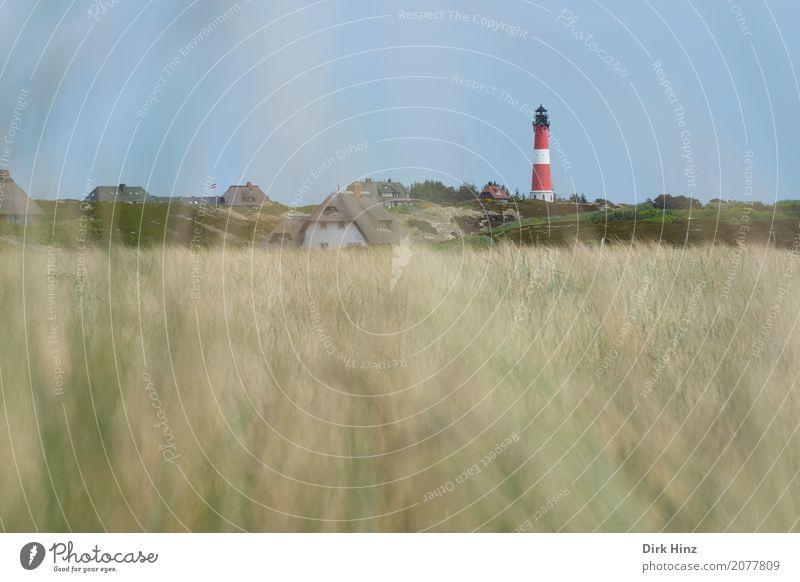 Leuchtturm in Hörnum auf Sylt Ferien & Urlaub & Reisen Tourismus Ausflug Ferne Freiheit Meer Insel Natur Pflanze Wildpflanze Küste Nordsee maritim Sicherheit