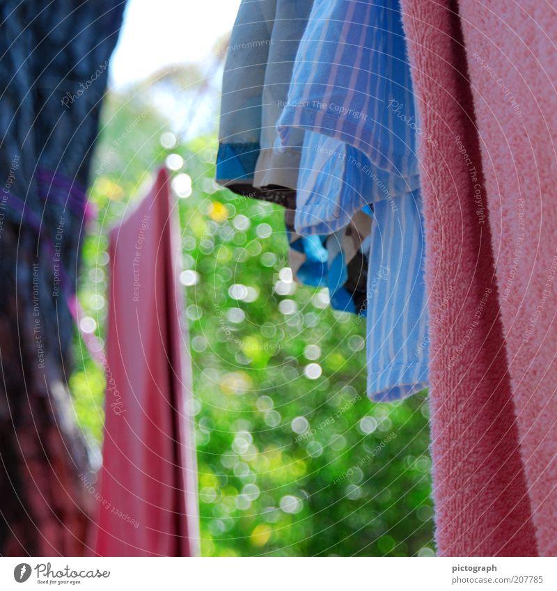 Hanging in the wind Sommer Natur Handtuch Wäsche Badehose Wäscheleine hängen einfach mehrfarbig ruhig Farbe trocknen Farbfoto Außenaufnahme Nahaufnahme Tag