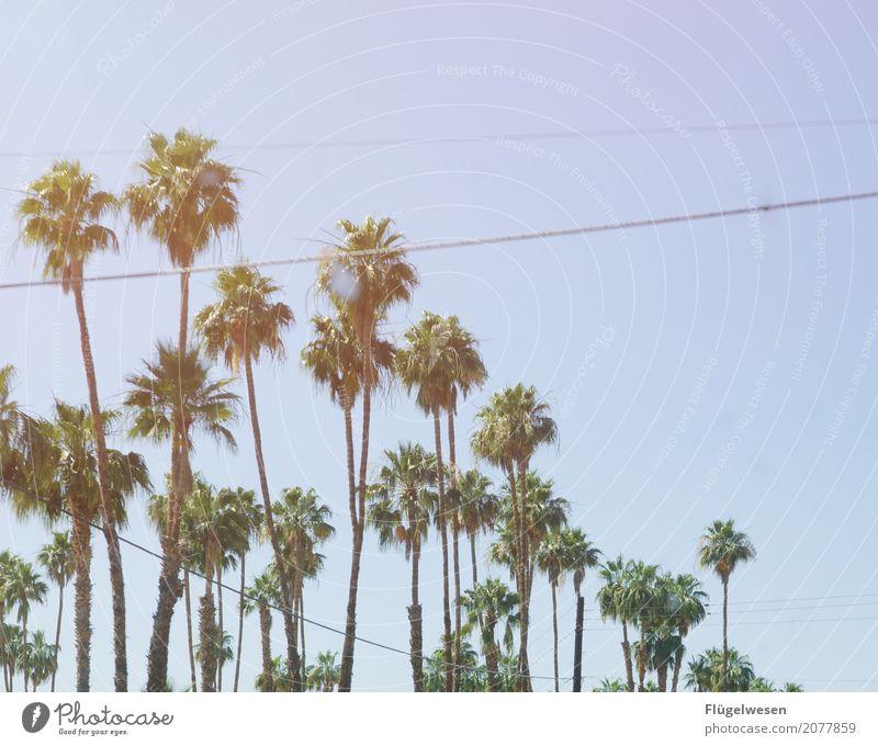 Palm Springs Ferien & Urlaub & Reisen Tourismus Ausflug Umwelt Natur Landschaft Himmel Klima Park Erde Palme Palmenwedel Palmenstrand Palmentapete Palmendach