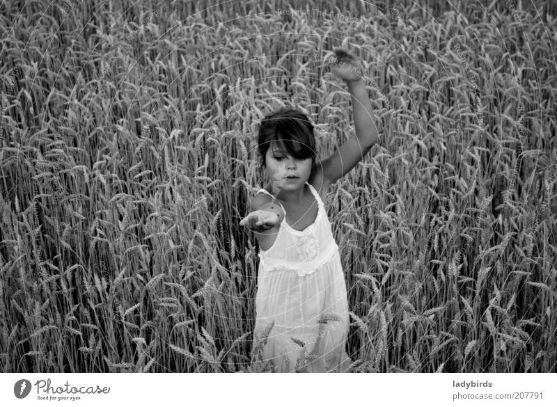 Mädchen im Kornfeld Spielen Sommer Kindererziehung Mensch Kindheit Leben Gesicht Arme 1 3-8 Jahre Tanzen Umwelt Natur Klimawandel Nutzpflanze Feld Kleid Käfer