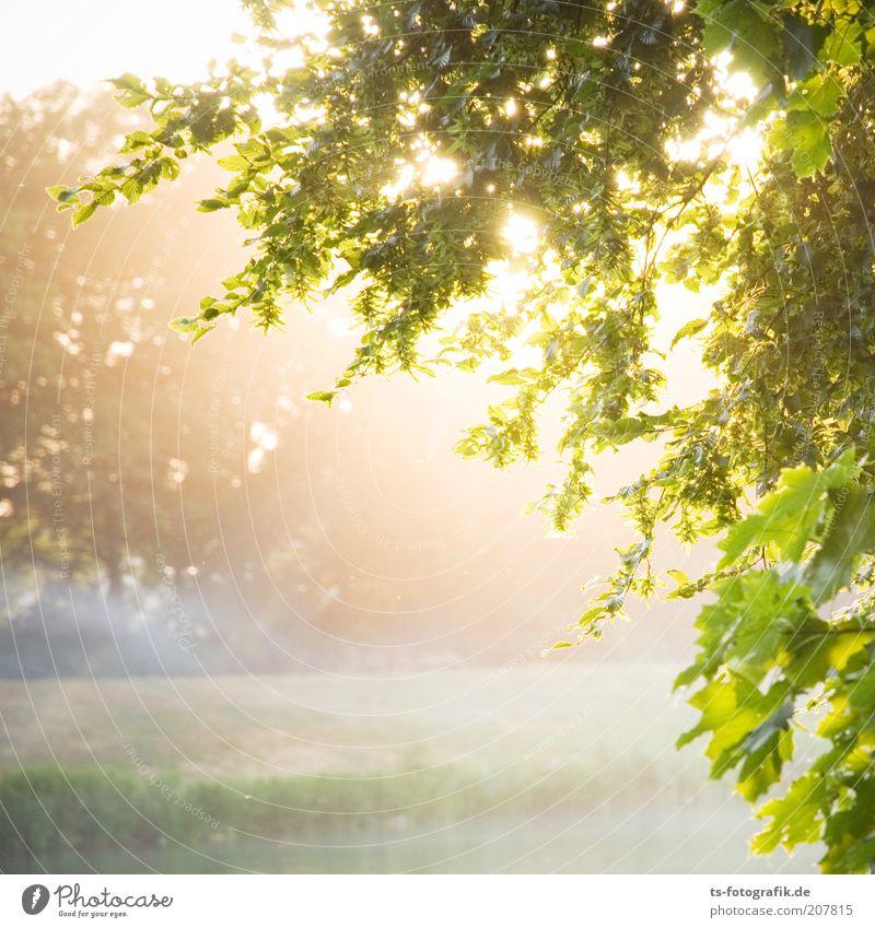 Sonnenflecken Natur Baum grün Pflanze Blatt Wiese Glück Landschaft Zufriedenheit Nebel Wetter Umwelt Wachstum Sträucher Sonnenstrahlen natürlich