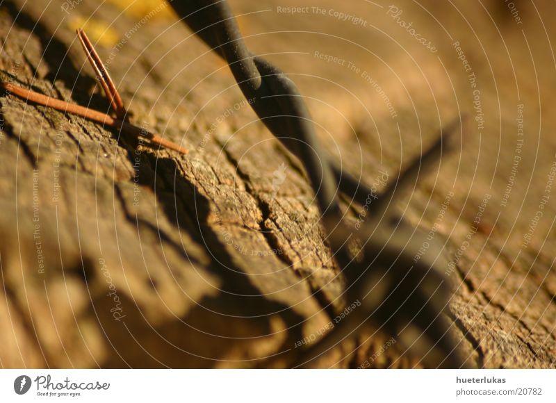 alter stacheldraht im holz Natur Erde Herbst Holz Metall Rost Stacheldraht Zaun Holzzaun Stacheldrahtzaun obskur Detailaufnahme Makroaufnahme
