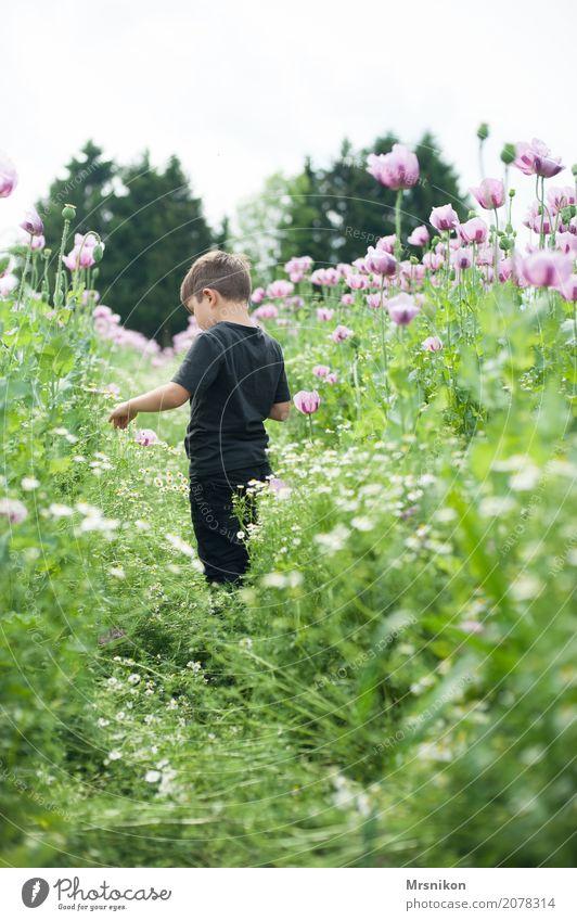 im Mohnfeld Junge Kindheit Leben 1 Mensch 3-8 Jahre Natur Pflanze Tier Sommer Feld laufen Mohnblüte rosa pflücken Sommertag Kamille Kamillenblüten gehen Blühend