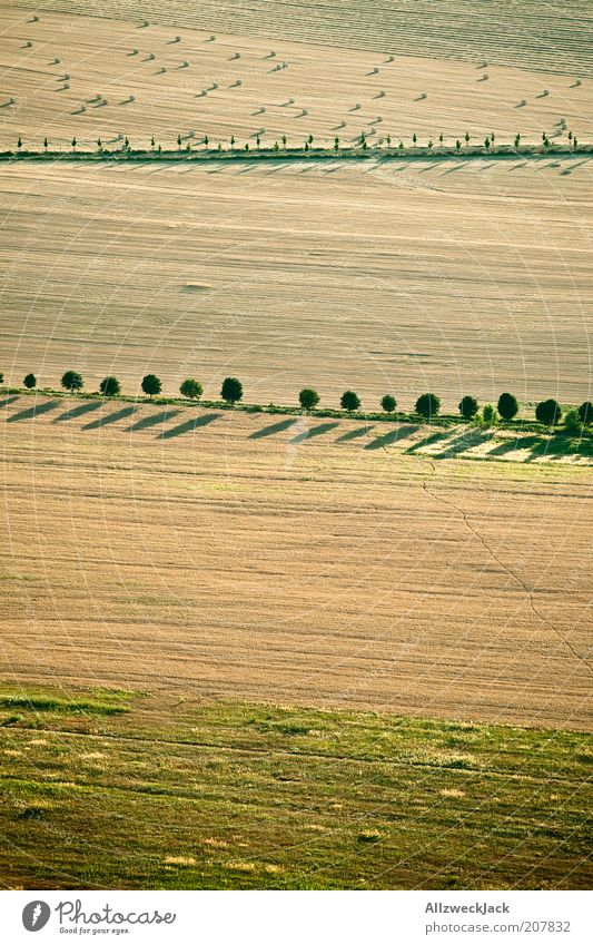 dorfidyll Natur Baum Sommer Ferne Feld Erde Ordnung ästhetisch natürlich Grenze Reihe Ernte Fußweg Schönes Wetter Heu Begrenzung