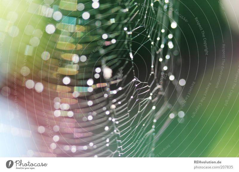 """""""Wach auf kleine Spinne, wach auf!"""" glänzend Spinnennetz Tropfen Tau Wasser Natur Leben zart spinnen fangen Loch kaputt gewebt fein grün Netzwerk natürlich nass"""