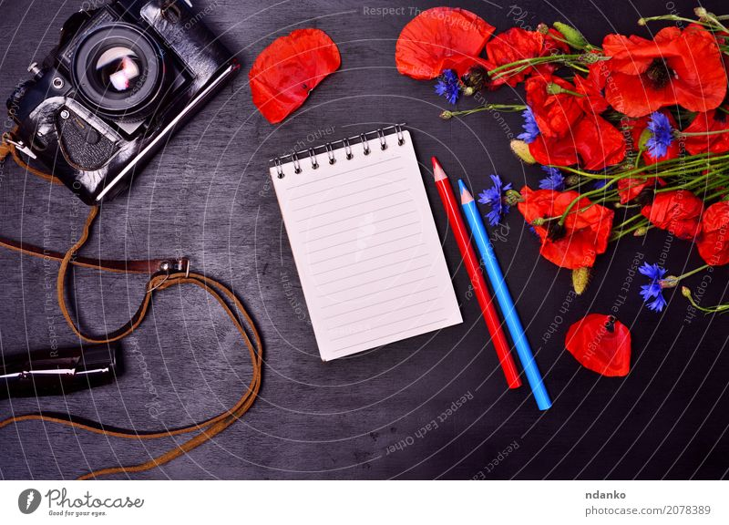 Notizblock und Vintage Filmkamera Tourismus Fotokamera Pflanze Blume Blatt Blüte Papier Schreibstift Blumenstrauß Holz Blühend natürlich blau grün rot schwarz