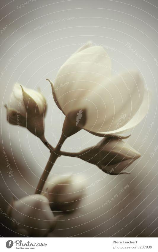 Power geflower^^ Umwelt Natur Pflanze Frühling Sommer Klima Schönes Wetter Blume Blüte Wildpflanze Blühend leuchten Wachstum ästhetisch schön weiß Stimmung Duft