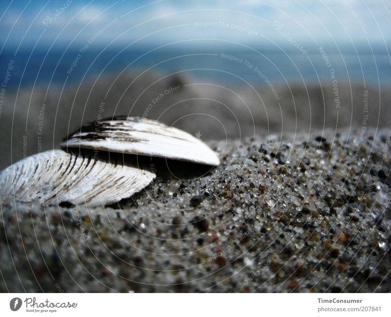 """""""Komm, wir m(k)uscheln miteinander am Strand!"""" schön Meer Sommer Strand Sand Sicherheit Schutz Muschel Sommerurlaub Sandkorn Muschelschale"""