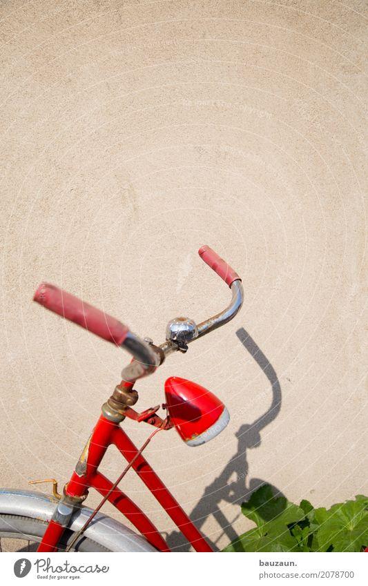 verdreht. Gesundheit sportlich Fitness Freizeit & Hobby Fahrradtour Sommer Sport-Training Fahrradfahren Sonne Sonnenlicht Pflanze Grünpflanze Verkehrsmittel rot