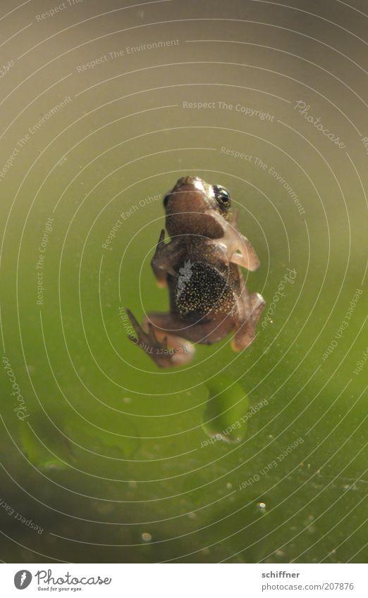 Angie Frosch 1 Tier Tierjunges klein gepunktet Nahaufnahme Makroaufnahme Froschperspektive Tierporträt Freisteller Tiergesicht Ganzkörperaufnahme Maul