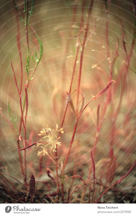 Geheime Pflanzenwelt. Natur schön Blume rot Gras Erde Umwelt ästhetisch Sträucher authentisch Klima geheimnisvoll Blühend Surrealismus