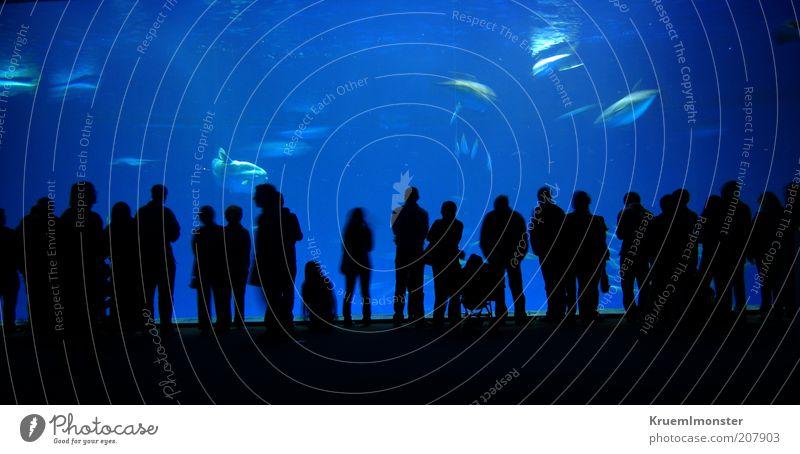 Who do you stare at? Mensch Menschengruppe Menschenmenge Kunst Ausstellung Zoo Kultur Natur Tier Wasser Riff Korallenriff Meer Stimmung Begeisterung Euphorie