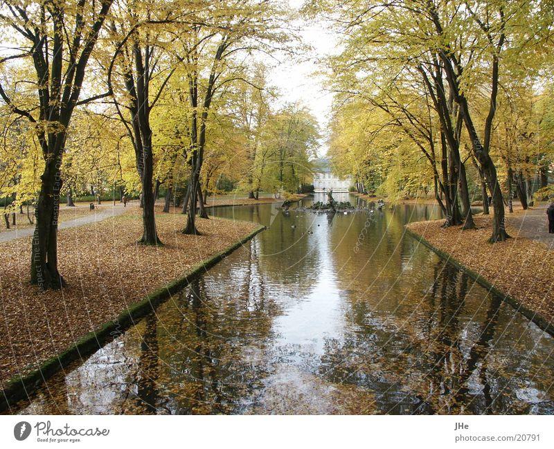 Herbst im Park Wasser Baum