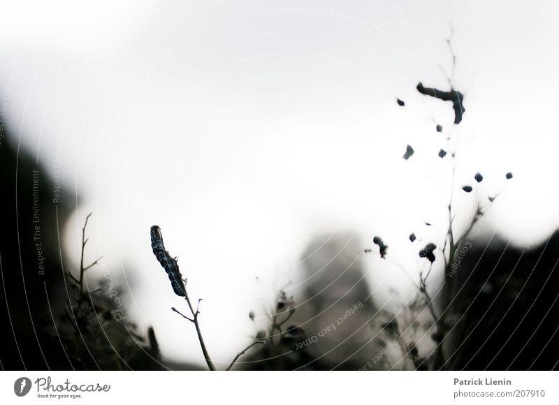 alles abgefressen Natur Himmel Pflanze Sommer dunkel Gras Landschaft Umwelt Sträucher Ast Schmetterling Wildtier hängen Fressen Zweig