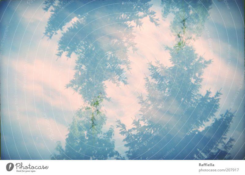 the trees are moving Natur Himmel Baum blau Sommer ruhig Wolken Tanne Doppelbelichtung Vignettierung Umwelt blau-grün