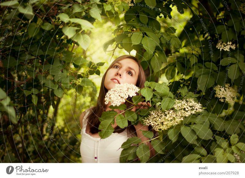 Gartenträumerei Mensch feminin Junge Frau Jugendliche Erwachsene 1 18-30 Jahre Natur Frühling Sommer Pflanze Sträucher Blüte Holunderblüte Holunderbusch träumen