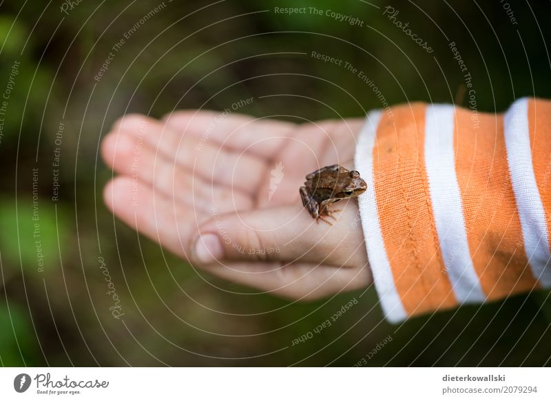 Kind mit Frosch Mensch Natur Landschaft Tier Wald Umwelt Frühling Wiese Spielen Garten lernen Neugier Bildung Wissenschaften fangen