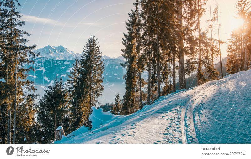 Winterlandschaft mit Blick auf die Alpen im Abendlicht Himmel Natur Pflanze Baum Landschaft ruhig Wald Berge u. Gebirge Umwelt Schnee Glück Eis Kraft