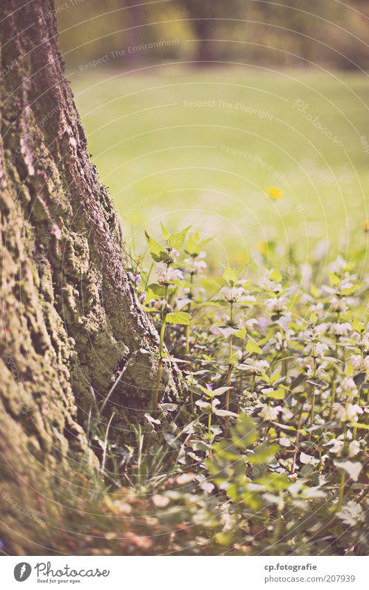 Baumbewuchs Erholung Garten Natur Pflanze Frühling Sommer Gras Baumrinde Park Wiese natürlich Außenaufnahme Schwache Tiefenschärfe Baumstamm