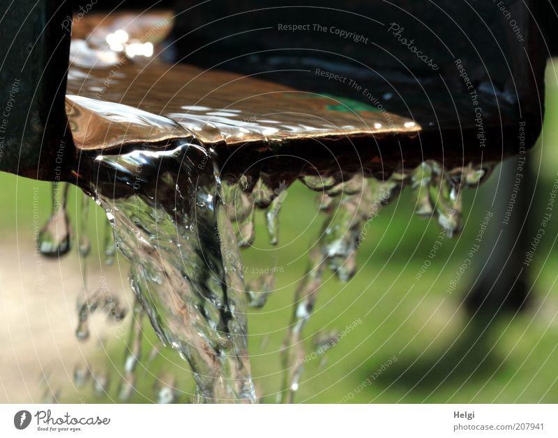 Erfrischung... Wasser grün Leben Bewegung braun Metall glänzend nass Geschwindigkeit frisch Trinkwasser ästhetisch Tropfen einfach Sauberkeit rein