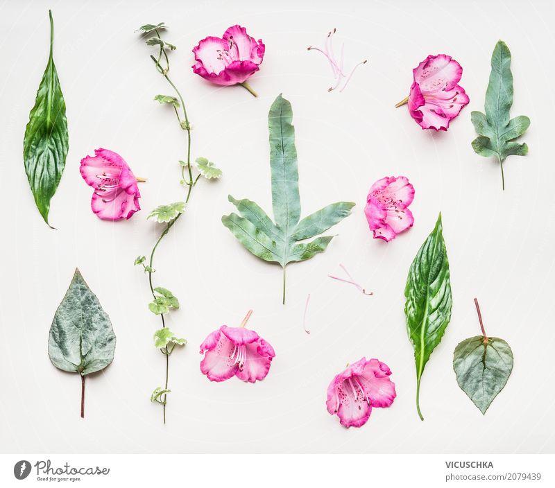 Botanische Composing Natur Pflanze Sommer grün weiß Blume Blatt Lifestyle Blüte Frühling Liebe Stil Design rosa Dekoration & Verzierung retro