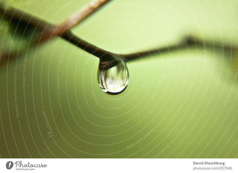 Feuchtgebiete Natur grün Sommer Leben Frühling frisch Wassertropfen einzeln nass Tropfen Klarheit Zweig Tau feucht Wasser Wasserspiegelung