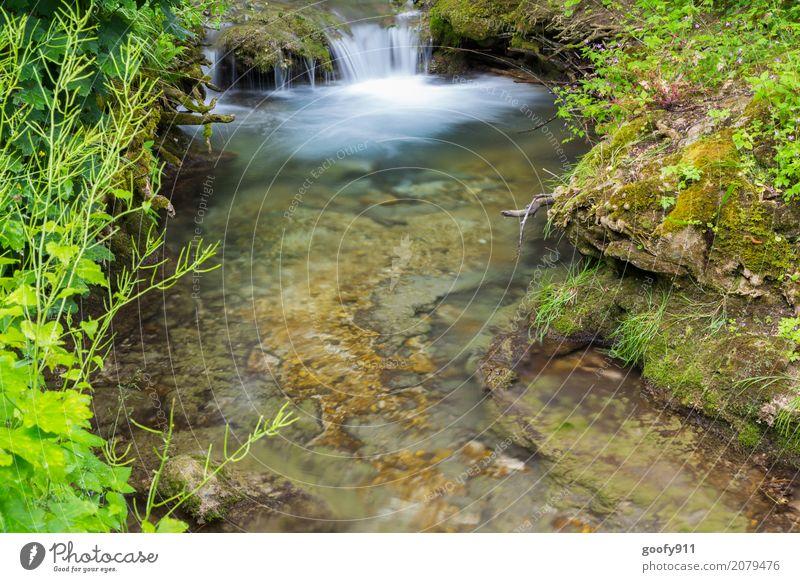 Mini Wasserfall Ausflug Abenteuer Sommer wandern Umwelt Natur Landschaft Pflanze Tier Erde Frühling Gras Sträucher Bach Fluss Stein Blühend entdecken