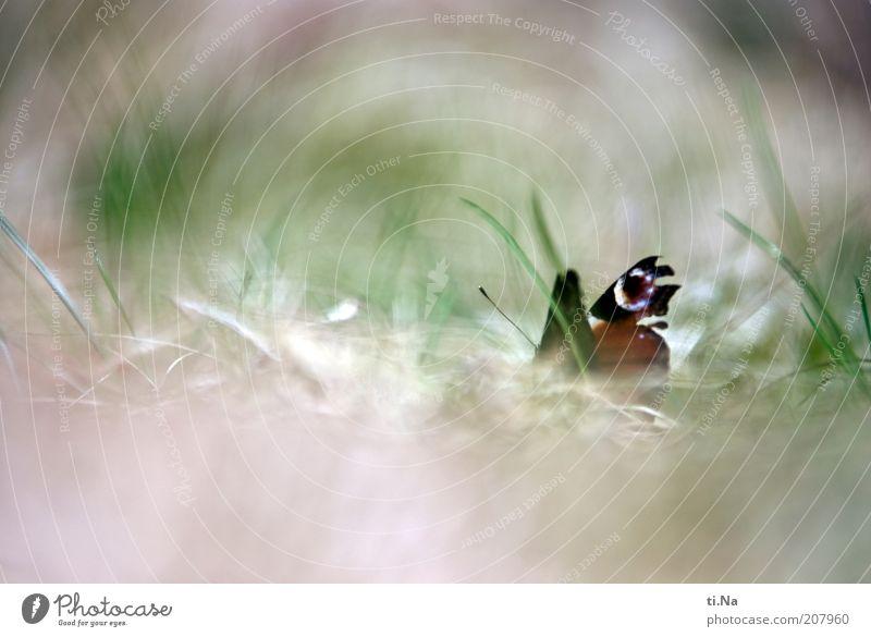 flieg kleine Seele Natur schön grün Pflanze rot Sommer Tier Wiese Gefühle Gras Frühling warten Umwelt beobachten natürlich Schmetterling