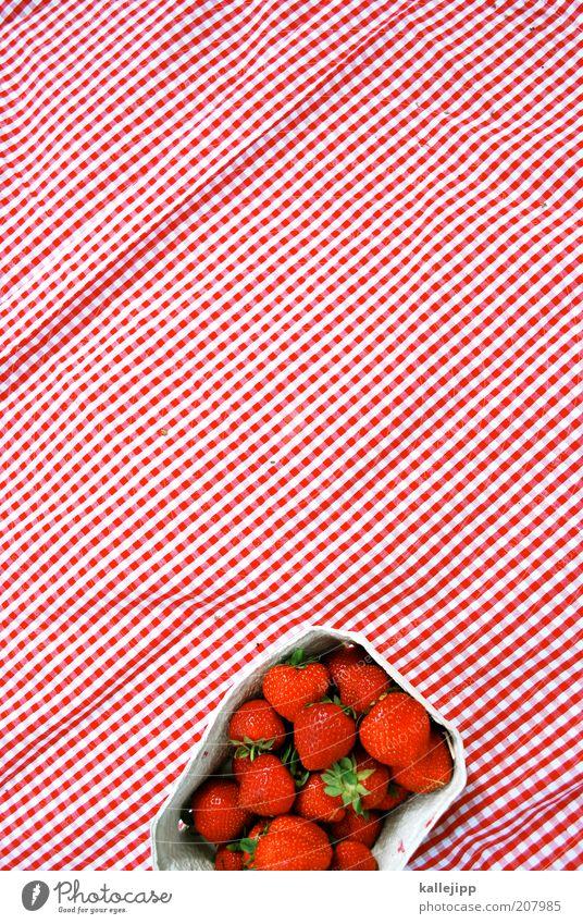 erdbeerbecher weiß rot Sommer Ernährung Gesundheit Lebensmittel Frucht Lifestyle frisch Karton Schalen & Schüsseln Bioprodukte Beeren Erdbeeren kariert