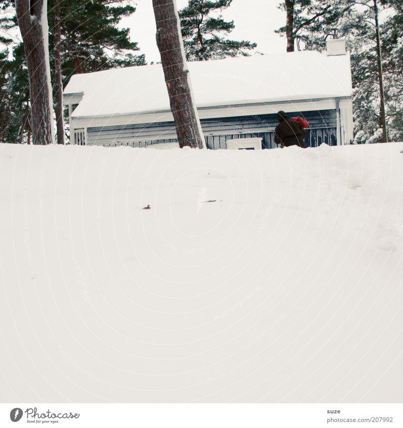 Holz holen Mensch Mann Natur weiß Baum Winter Ferien & Urlaub & Reisen Haus kalt Schnee hell Erwachsene maskulin Umwelt Frost