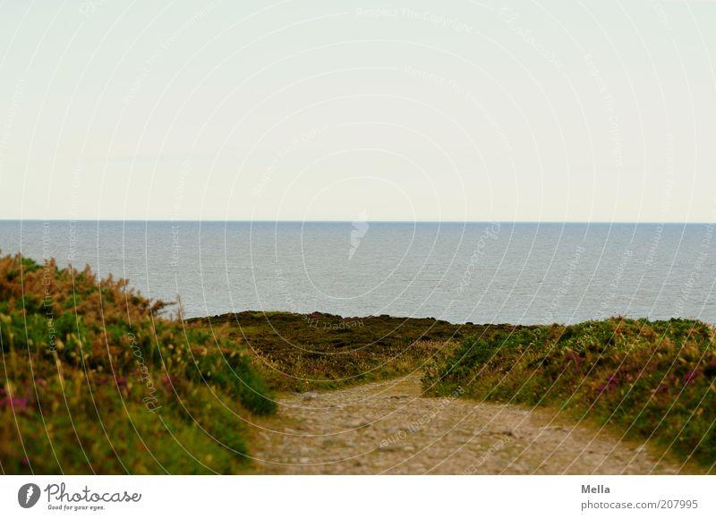 Erwartung Natur Wasser Himmel Meer grün Ferien & Urlaub & Reisen ruhig Einsamkeit Ferne Gras Freiheit Wege & Pfade Landschaft Stimmung Küste Umwelt