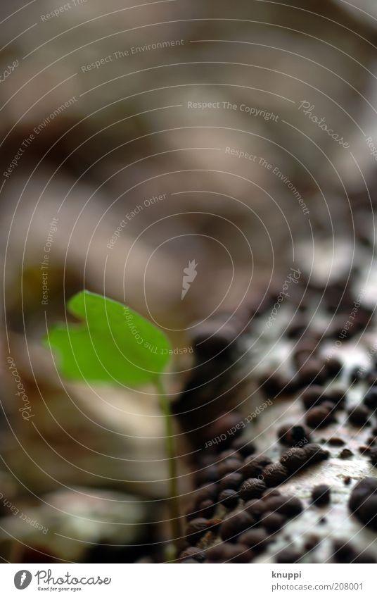 Ast Sommer Umwelt Natur Pflanze Erde Frühling Wildpflanze Blatt Blattgrün Holz Wachstum alt außergewöhnlich braun schwarz weiß gefleckt Punkt Naturphänomene