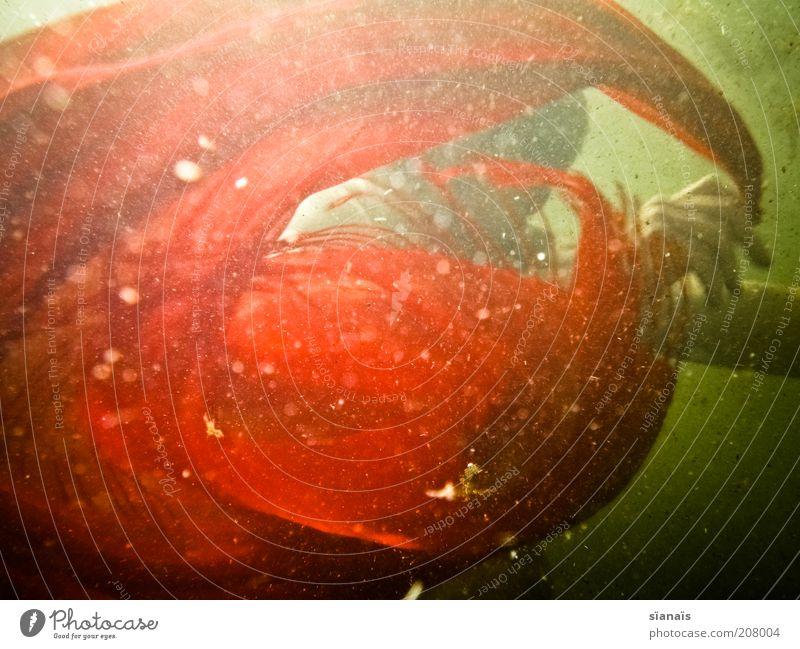 torero Mensch Wasser rot elegant tauchen Wut geheimnisvoll Stoff drehen exotisch Märchen Aggression Tuch Zauberei u. Magie Tänzer Schal