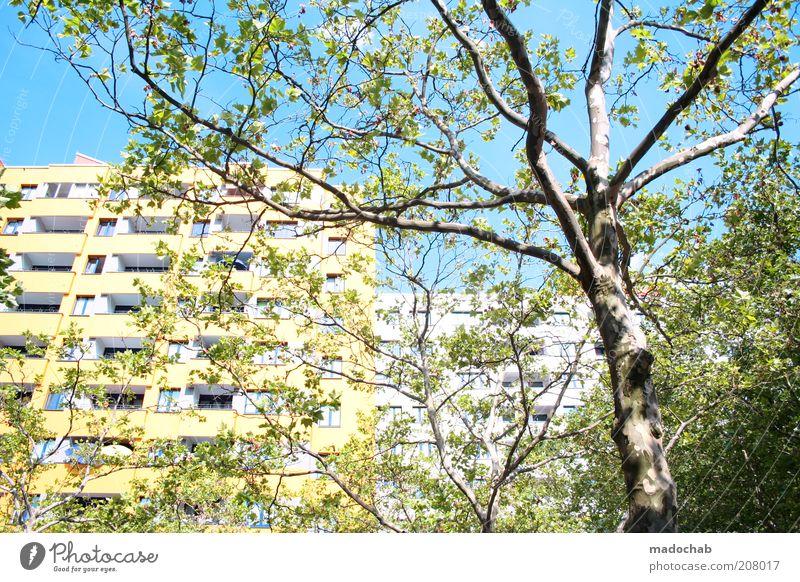 Märkisches Viertel Natur Baum Haus Berlin Stil Gebäude Landschaft Architektur Umwelt Hochhaus Fassade Lifestyle modern ästhetisch Wachstum Wandel & Veränderung