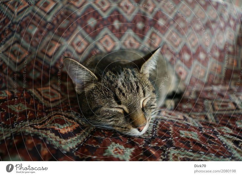 Katzenleben! Häusliches Leben Wohnung Sofa Wohnzimmer Decke Tagesdecke Lieblingsplatz Tier Haustier Hauskatze Tigerkatze tabby Europäisch Kurzhaar 1 liegen