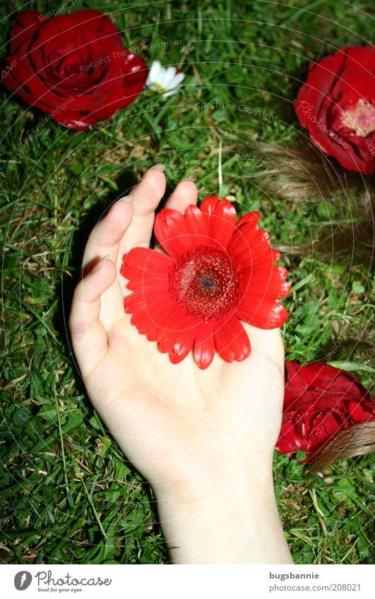 Roter Blumenregen Natur Hand grün Pflanze rot Blume Farbe feminin Gefühle Gras Blüte Haare & Frisuren träumen elegant liegen