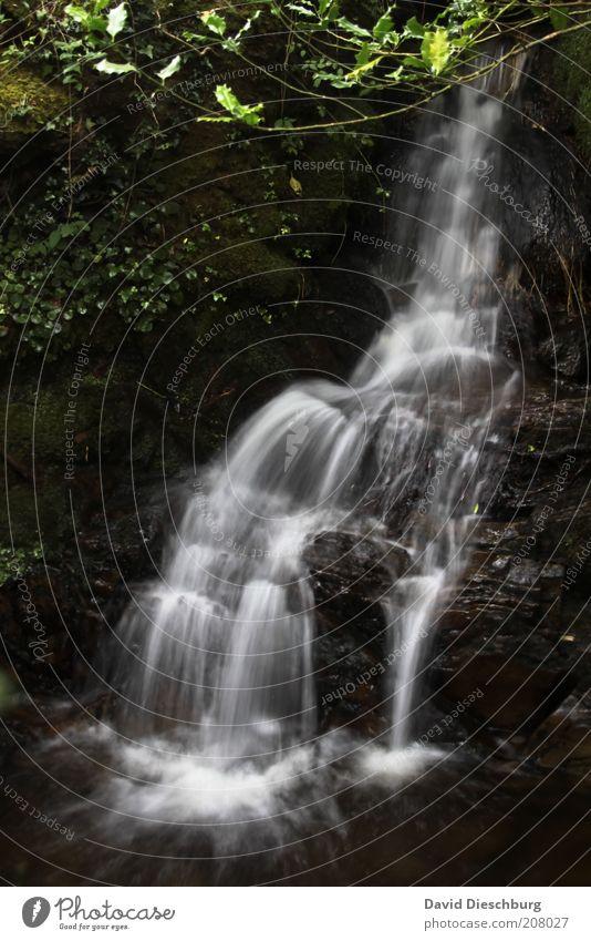 *400* Irland 1 Natur Wasser Ferien & Urlaub & Reisen weiß Sommer Pflanze ruhig schwarz Erholung Wald Landschaft Berge u. Gebirge Leben Frühling Stein Felsen