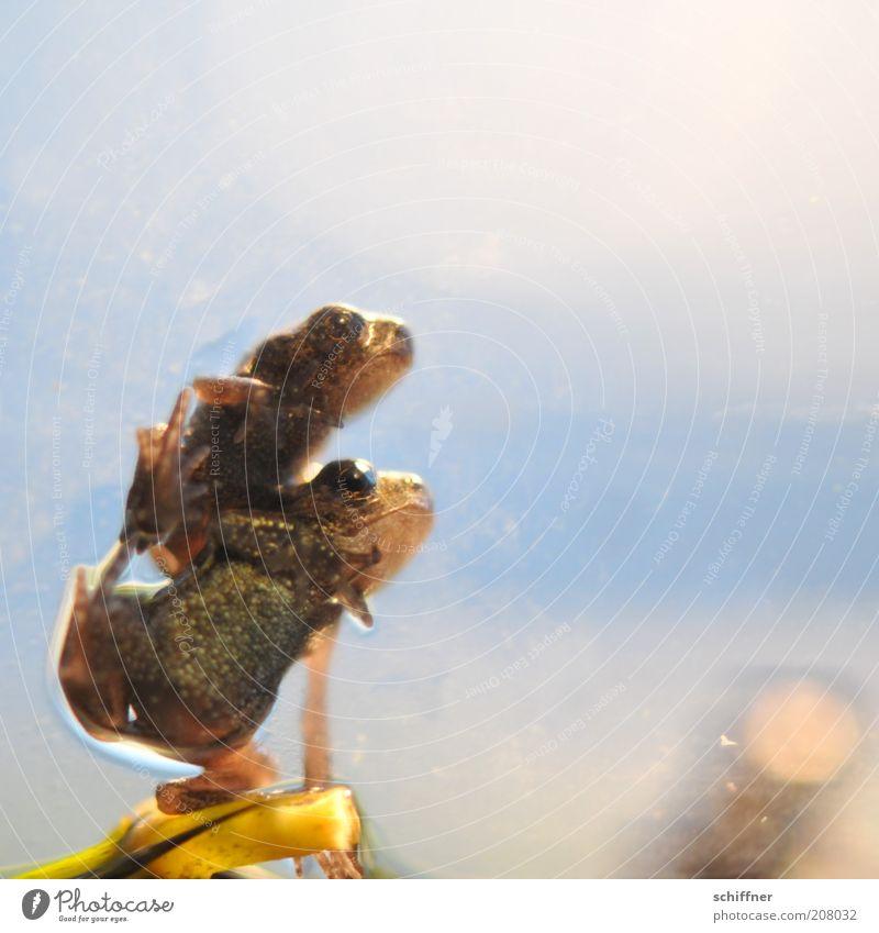 Angie und Guido Tier Frosch 2 Tierpaar Tierjunges hocken sitzen klein Laster Zusammenhalt Zusammensein zusammengehörig aufeinander Nahaufnahme Makroaufnahme