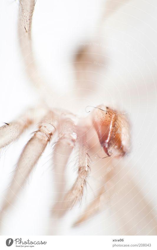 wer oder was bin ich? weiß Tier Kopf Beine glänzend Insekt krabbeln Makroaufnahme Bewegung