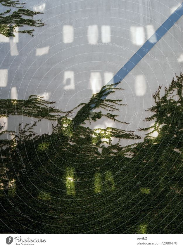 Es geht wieder aufwärts Grünpflanze Efeu Kletterpflanzen Ranke Bautzen Lausitz Deutschland Kleinstadt bevölkert Gebäude Plattenbau Mauer Wand Fassade Fenster
