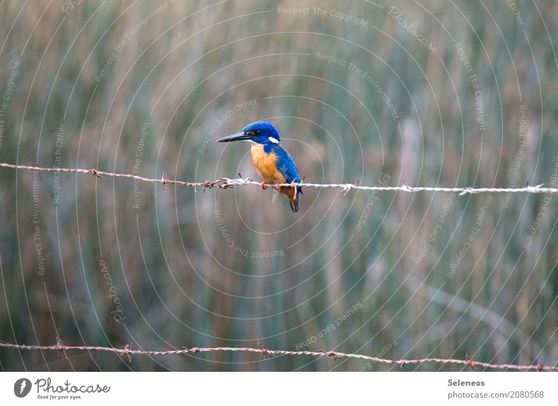 abwarten Natur Tier Ferne Umwelt natürlich Küste klein Freiheit Vogel Ausflug Wildtier Abenteuer Flügel beobachten Seeufer nah