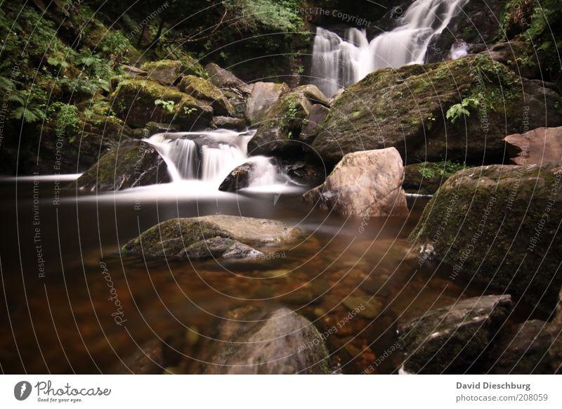 Killarney waterfalls Leben Erholung ruhig Ferien & Urlaub & Reisen Berge u. Gebirge Natur Landschaft Pflanze Wasser Frühling Sommer Moos Felsen Flussufer