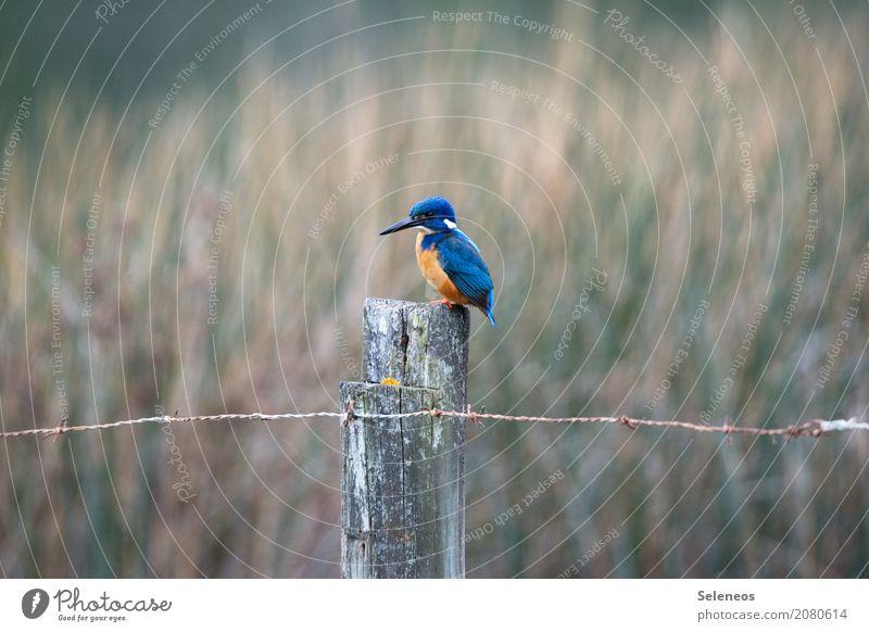 beauty Umwelt Natur Küste Seeufer Flussufer Teich Tier Wildtier Vogel Eisvögel 1 natürlich Ornithologie Farbfoto Außenaufnahme Menschenleer