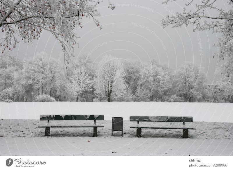 Warten auf den Sommer Natur Winter Park Wiese Wald Bank Müllbehälter Einsamkeit ruhig grau Symmetrie Frost Farbfoto Gedeckte Farben Außenaufnahme Menschenleer