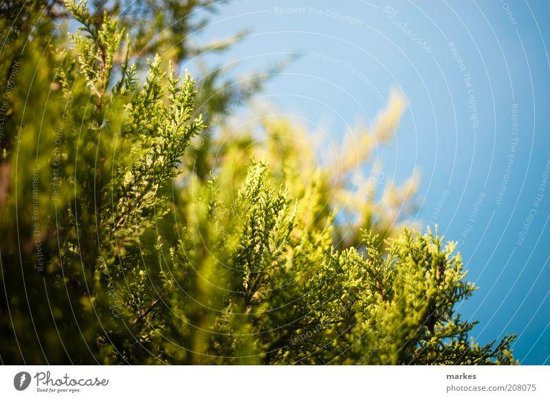 Natur Himmel grün Stimmung Sträucher